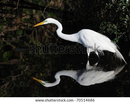 Egret - stock photo