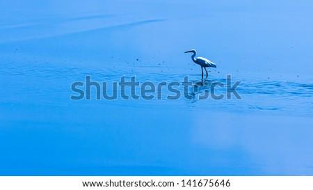 egret bird in gulf of thailand - stock photo