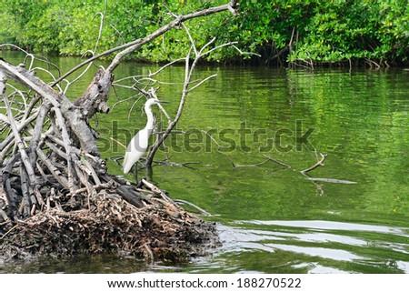 Egret on the lake                                     - stock photo