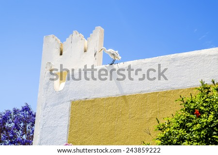 Egret standing on the wall of the House on a sunny day on the background of the blue sky - stock photo