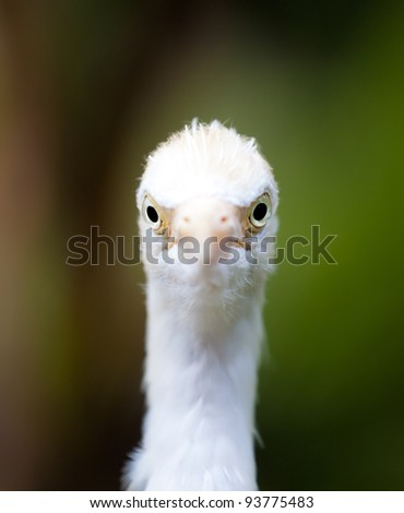 Egrets looking on you - stock photo
