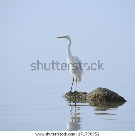 egrets play in sunset - stock photo