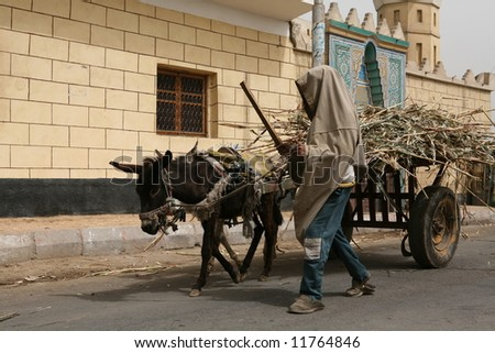 Egyptian boy with a cart of sugar cane. - stock photo