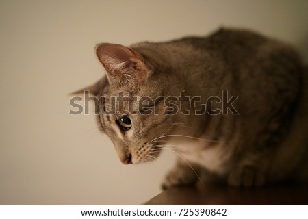 https://thumb9.shutterstock.com/display_pic_with_logo/167494286/725390842/stock-photo-egyptian-mau-cat-in-a-room-725390842.jpg