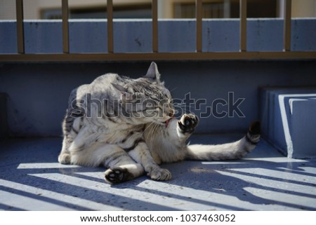 https://thumb9.shutterstock.com/display_pic_with_logo/167494286/1037463052/stock-photo-egyptian-mau-in-a-rooftop-1037463052.jpg
