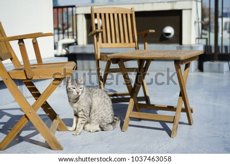 https://thumb9.shutterstock.com/display_pic_with_logo/167494286/1037463058/stock-photo-egyptian-mau-in-a-rooftop-1037463058.jpg