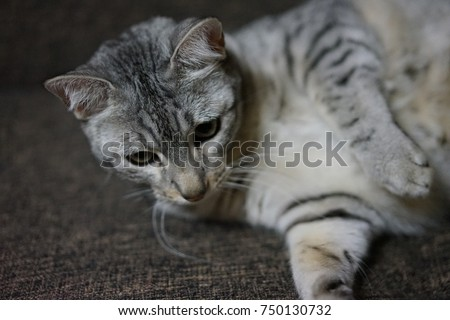 https://thumb9.shutterstock.com/display_pic_with_logo/167494286/750130732/stock-photo-egyptian-mau-in-a-room-750130732.jpg
