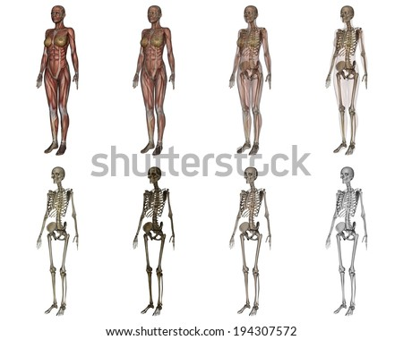 Eight images of the human body including skeletal figures. - stock photo