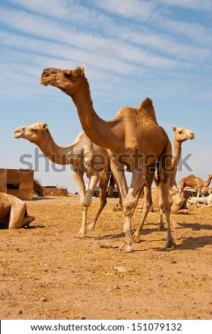 El Shalaten in Southern Egypt on January 2nd, 2012 - stock photo