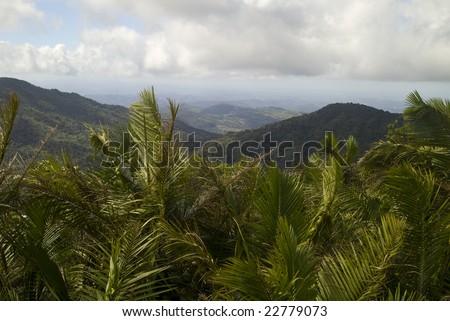 El Yunque Rainforest in Puerto Rico - stock photo