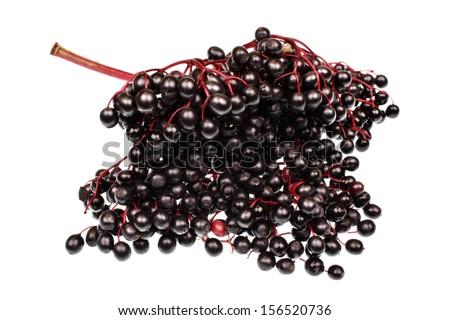 Elderberry branch isolated on white - stock photo