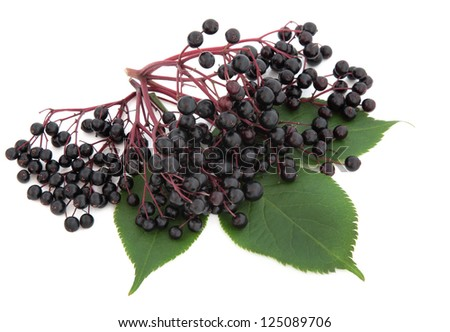 Elderberry fruit with leaf sprigs over white background. - stock photo