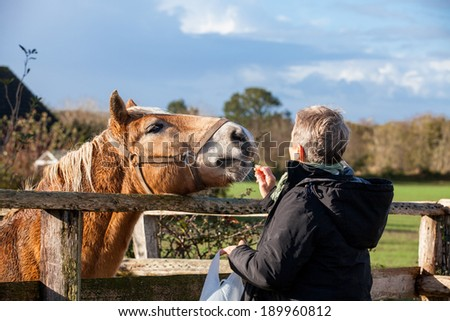 Elderly couple laughing and having fun petting a horse in a paddock on a cold sunny winter day as they enjoy the freedom of their retirement - stock photo