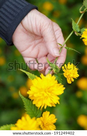 Elderly hand holding a flower in her hands - stock photo