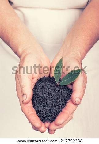 Elderly hands holding organic black tea with leaf with retro style