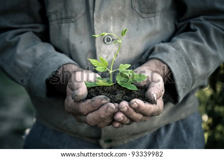 Elderly man hands holding a green young plant. Symbol of spring and ecology concept - stock photo