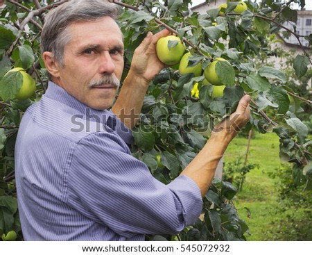 Elderly man in the orchard at the end of August