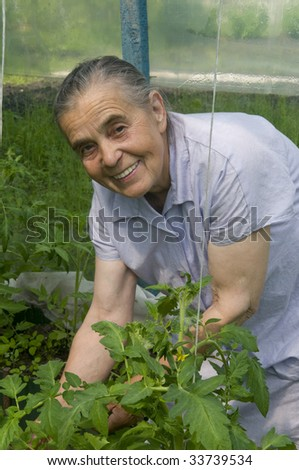 Elderly woman on a kitchen garden. Cultivation of tomatoes.