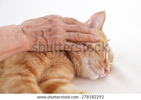 Elderly woman stroking a ginger cat - stock photo