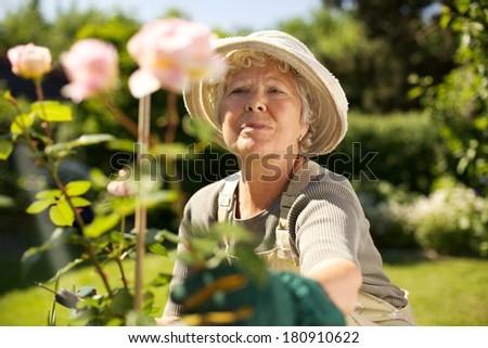 Elderly woman wearing sun hat looking at flowers in backyard garden - Outdoors - stock photo