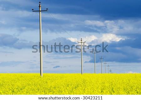 Electric pylon in a yellow farmland - stock photo