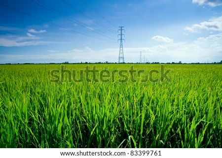 Electrical net of poles on blue sky and green rice meadow. - stock photo