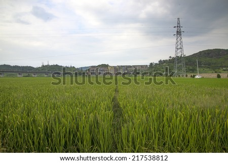 Electricity tower in rural rice field
