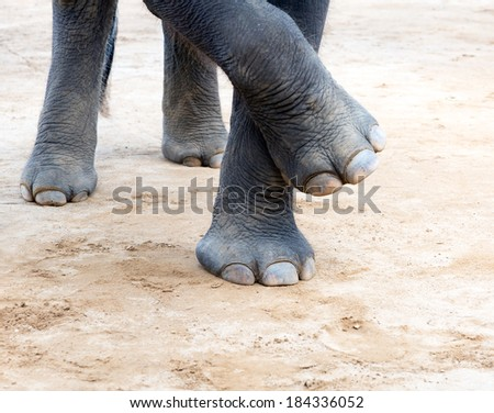 Elefant legs - stock photo