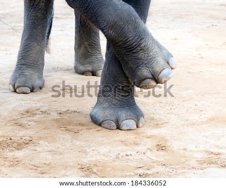 Elefant legs - stock photo