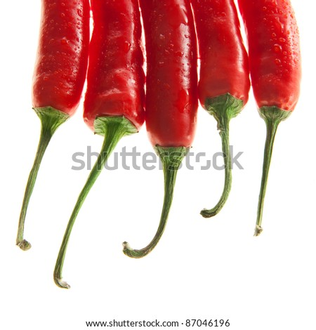 elegant chilli peppers - stock photo