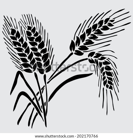 Elegant decorative wheat, design element. Floral decoration for vintage invitations, greeting cards, banners. - stock photo