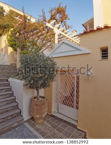 elegant house door and olive tree in huge jar - stock photo