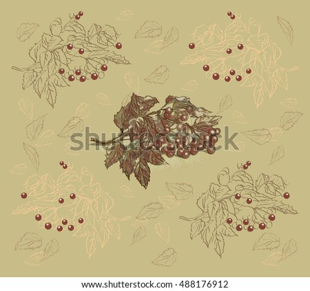 Element pattern with a branch and ripe, red berries of viburnum