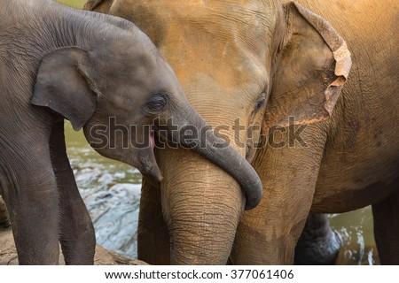 Elephant and baby elephant - stock photo