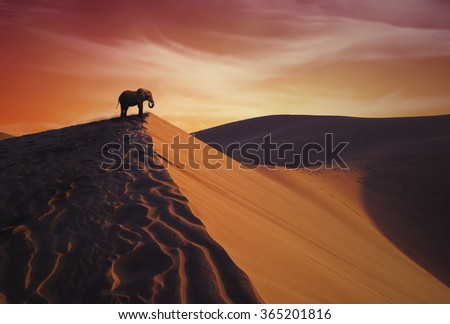 Elephant and desert
