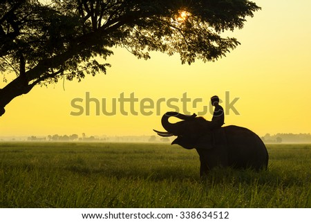 Elephant are a happy on cornfield with bulldozers and mahout in sunrise,Surin,Thailand - stock photo