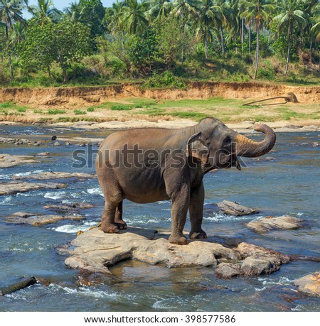 Elephant Asia jungle tropical summer in river wildlife - stock photo
