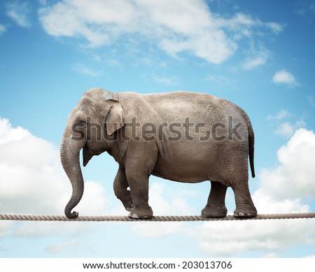 Elephant balancing on a tightrope concept for risk, conquering adversity and achievement - stock photo