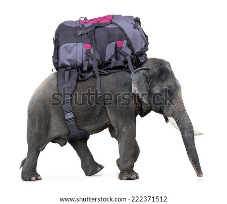 elephant carries a large backpack,  isolated on white background   - stock photo