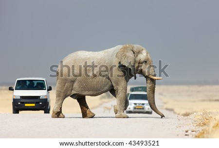 Elephant crossing the road and blocking tourist vehicles ; Etosha - stock photo