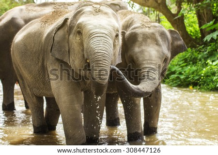 Elephant drinking water.