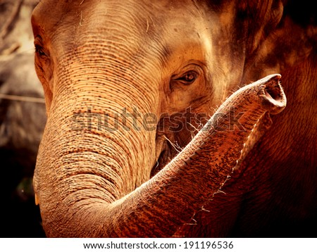 elephant face - stock photo
