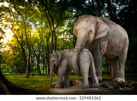 Elephant family be alive in the forest - stock photo