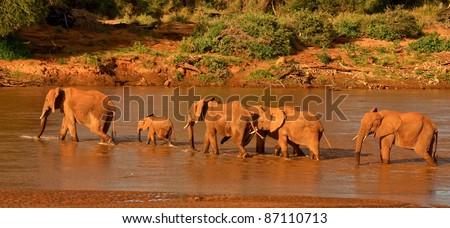 Elephant family crossing river - stock photo