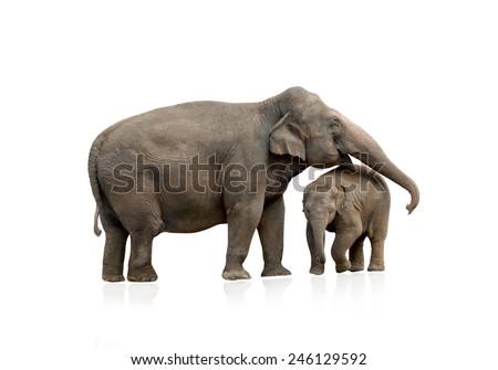 Elephant female with baby isolated - stock photo