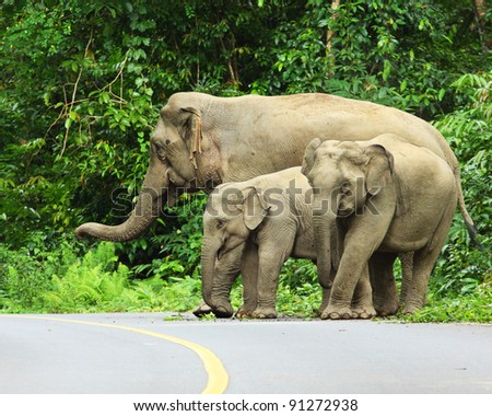 elephant forest Asia family - stock photo