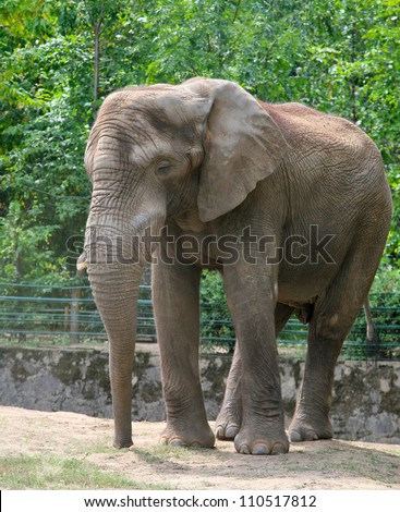 Elephant head and skin closeup. - stock photo