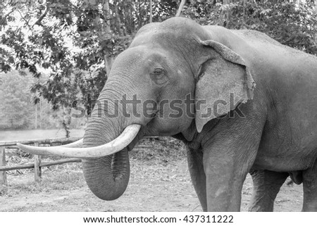 elephant head close up with rough skin surface, black and white tone - stock photo