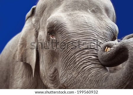 Elephant head, trunk and skin close up - stock photo