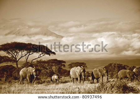 Elephant herd in front of Mt. Kilimanjaro in sepia - stock photo